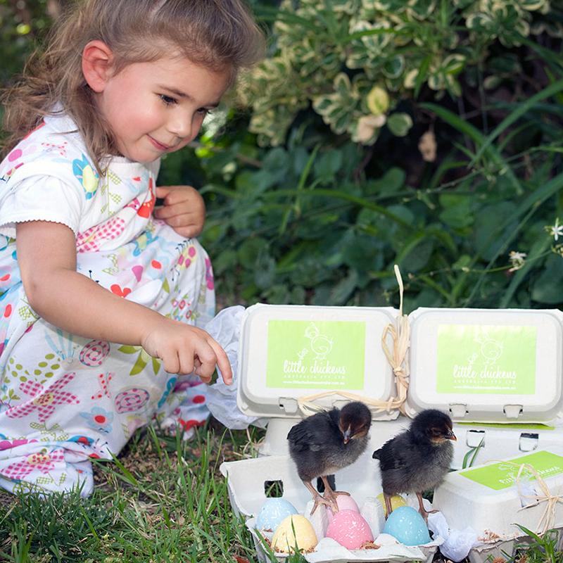 Little Chickens Australia – Branding